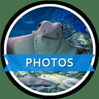 RAC-photos-icons