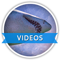 RAC-videos-icons