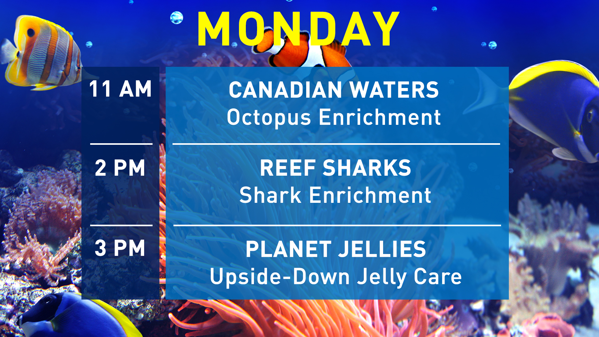 Aquarist-Talks-Monday-WEB