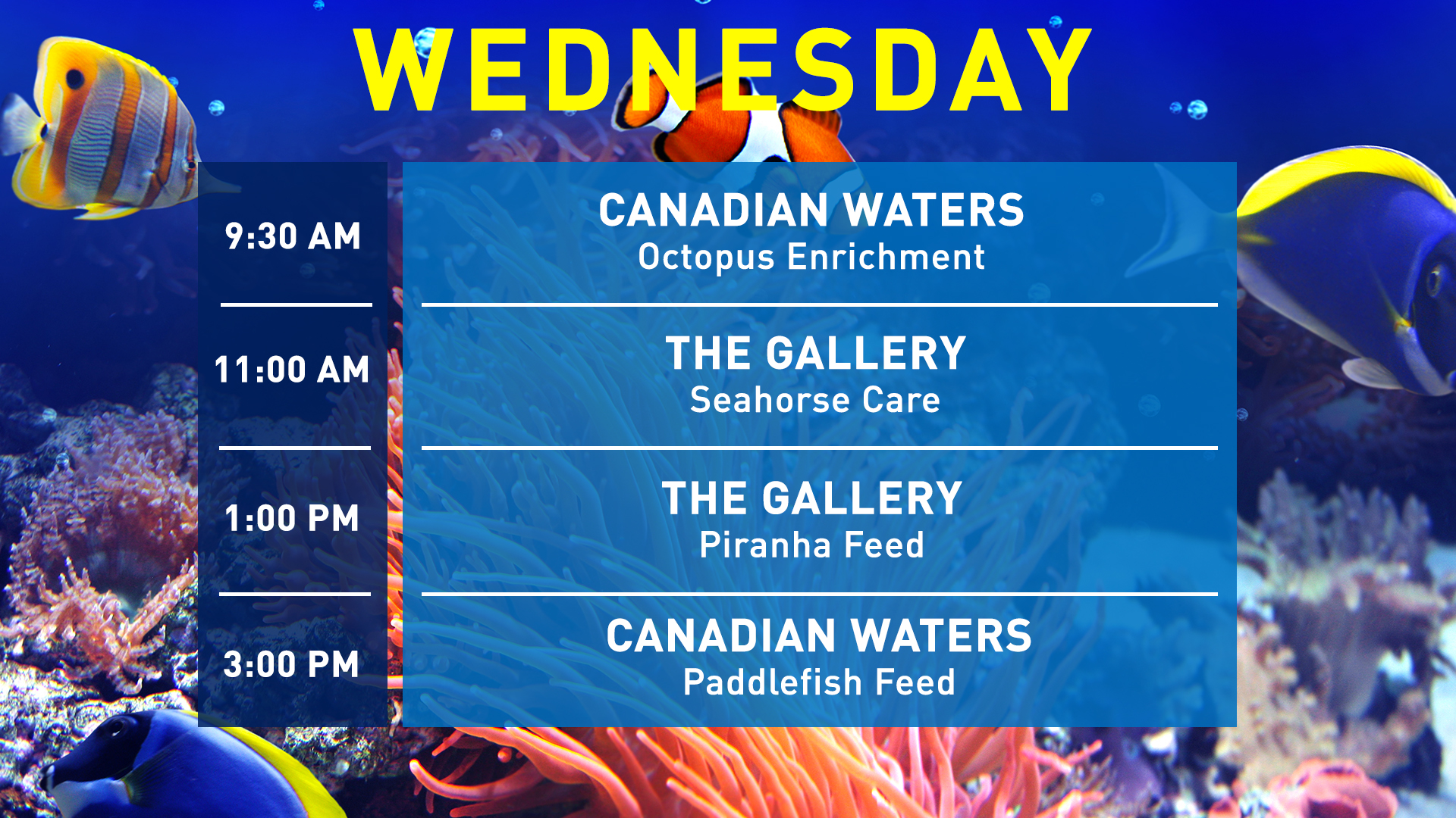 Aquarist-Talks-Wednesday-WEB