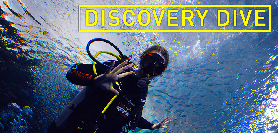 Discovery-Dive-Slider