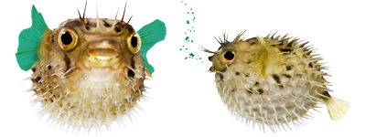 Discovery Center - Pufferfish
