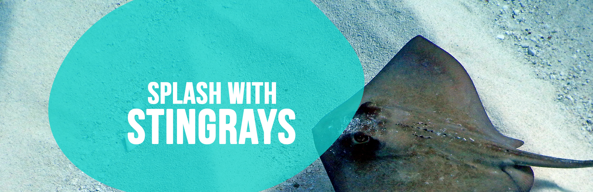 Header image of Stingrays for Splash with the Stingrays page