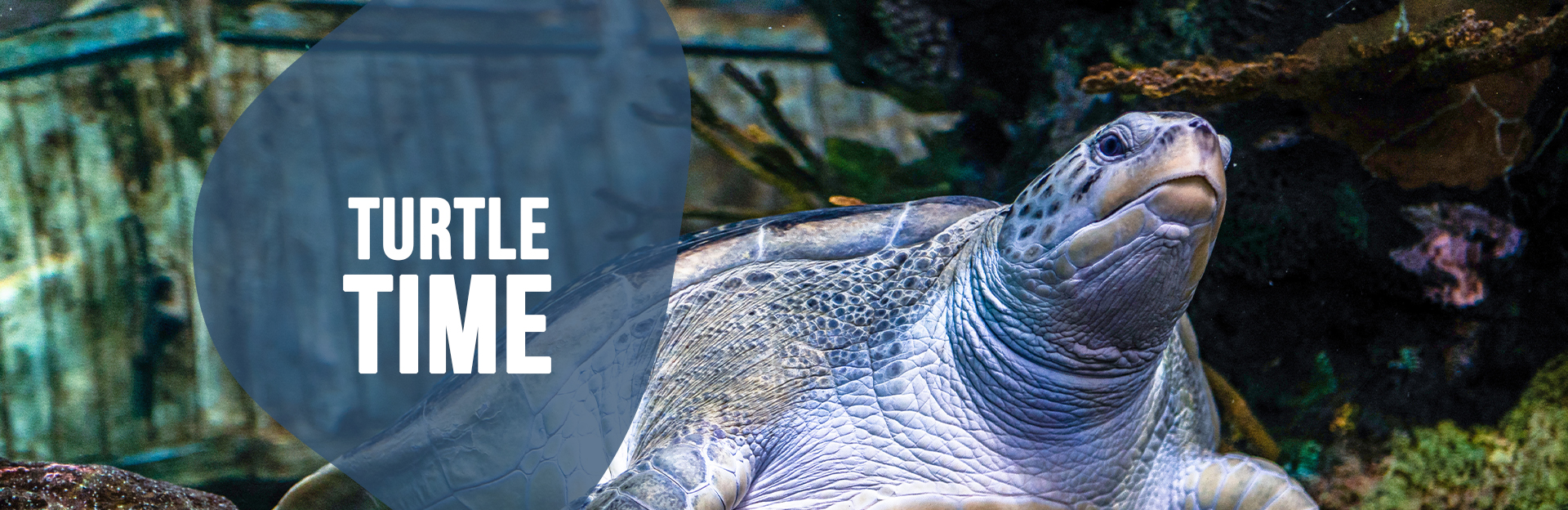 Header Image of a turtle for the Turtle Time page