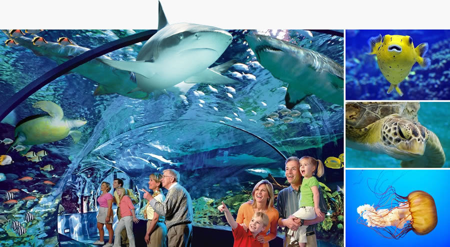 Ripley's Aquariums