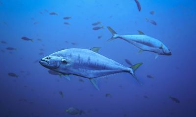 Study reveals climate change depriving the oceans of oxygen