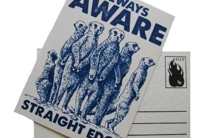 postcard meerkats