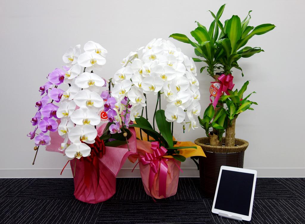 flowerDSC03247
