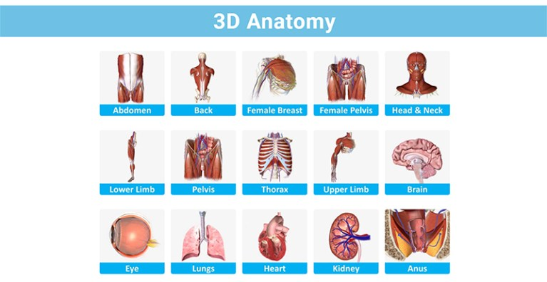 How to Study Anatomy in Medical School 3d