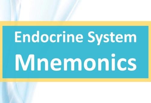 Endocrine System Mnemonics