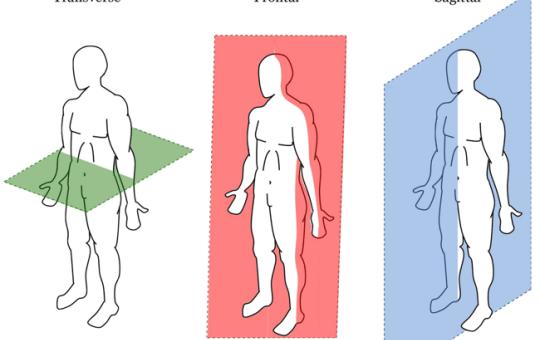 anatomicalplanes