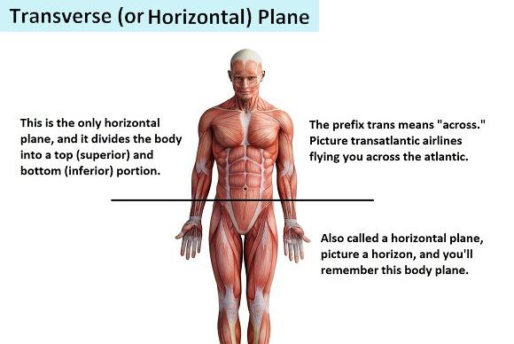 transverse-plane