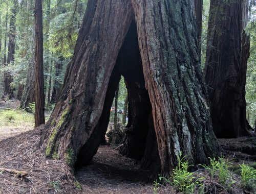 Beginner hikes in Big Basin Redwoods State Park