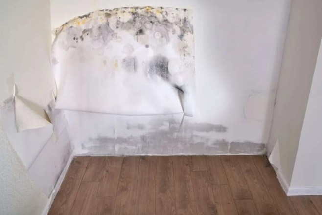 What damage can mold cause