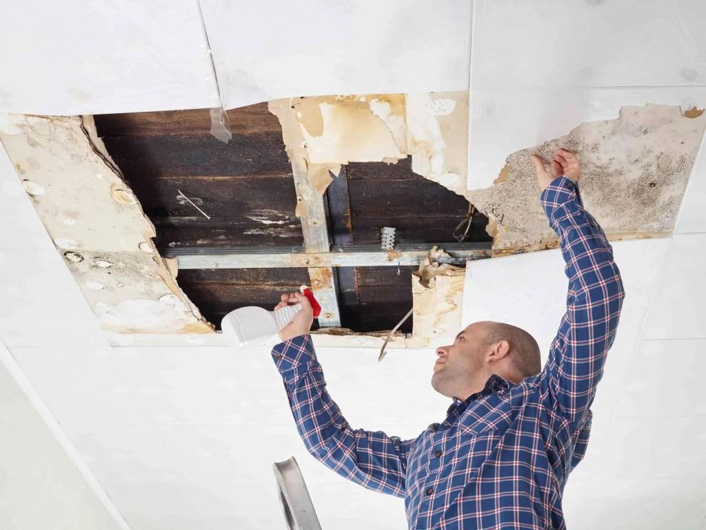 Do I really need mold remediation