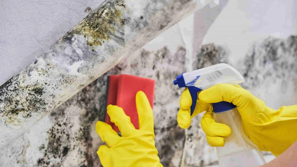 Do you need a professional to remove black mold