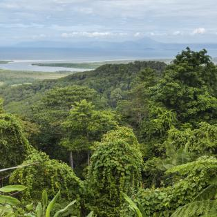 Daintree National Park