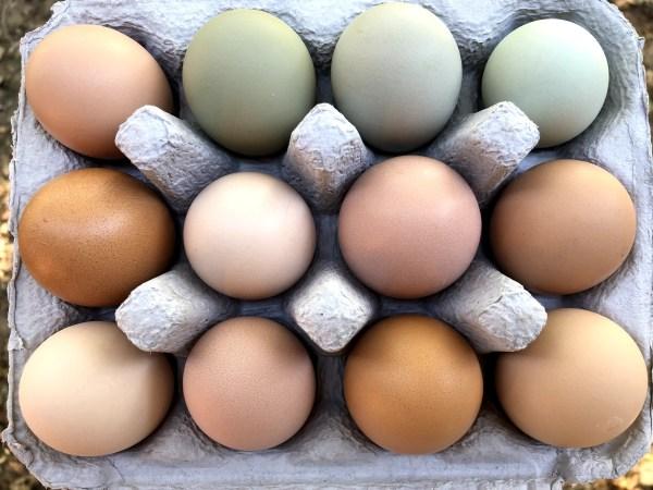 Ritter Farm Pastured Eggs