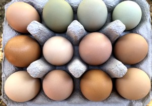 Ritter Farm Pastured Eggs