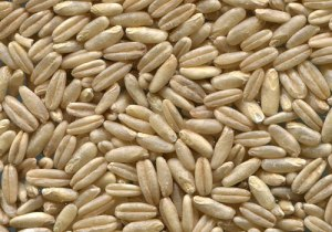 Non-GMO Oats