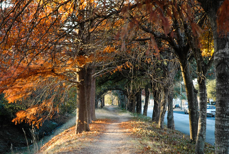 A Trail Through Fall Colors