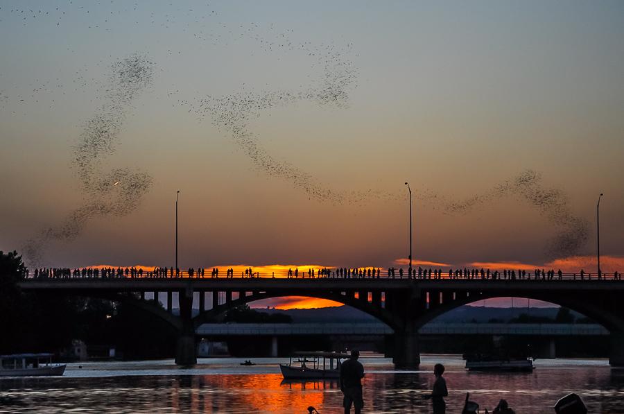 Austin Texas Bats Congress Bridge Sunset