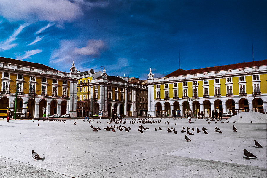 Bird Square Lisbon Portugal
