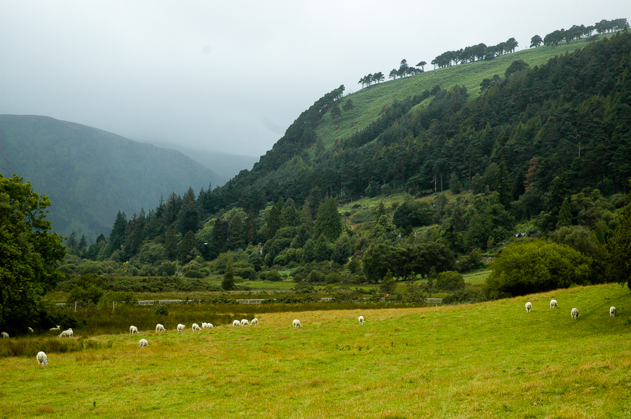 Glendalough Hillside Wicklow Mountains