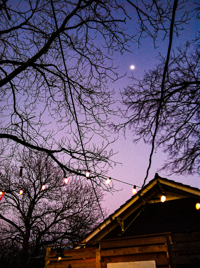 Moon Violet Twilight Hanging LIghts, Skeleton Trees