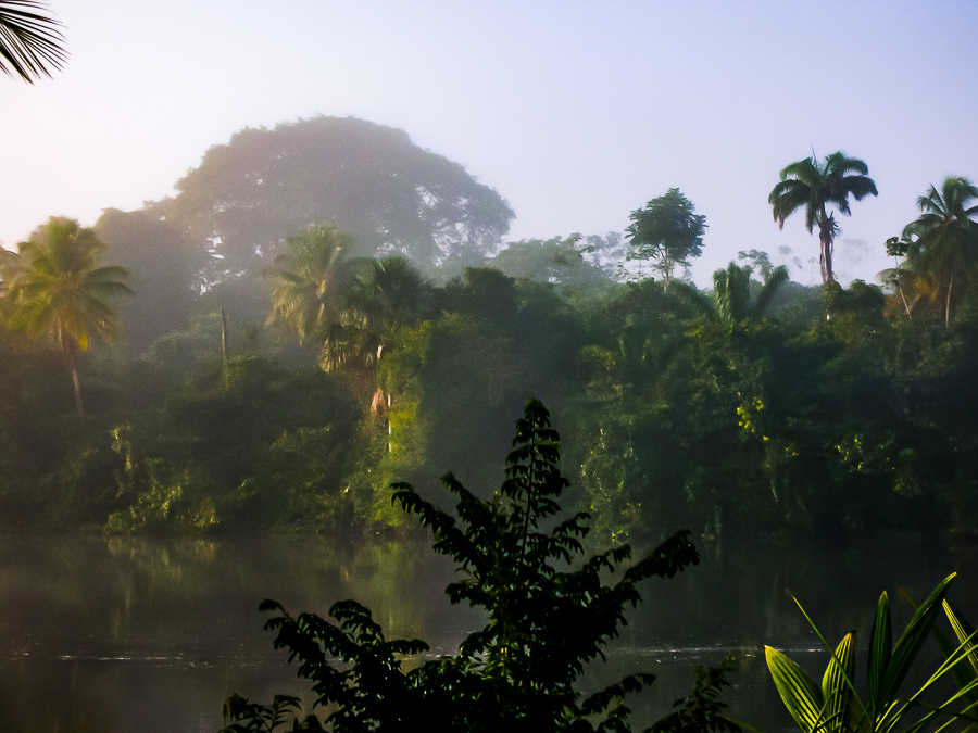 Guyana, Morning Mist In The Jungle