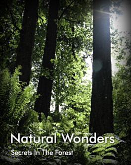 Photo Portfolio - Natural Wonders