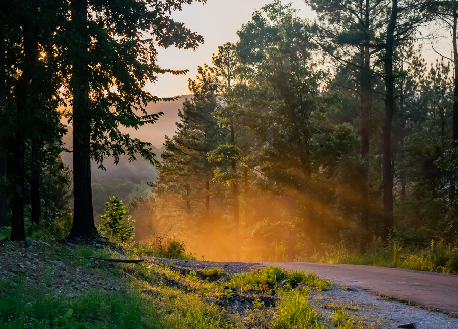 Sunlight Filtering Through Pine Forests At Sunset