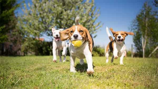 Benefits of using ultrasonic dog trainers