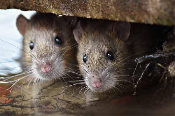 Remove their habitat