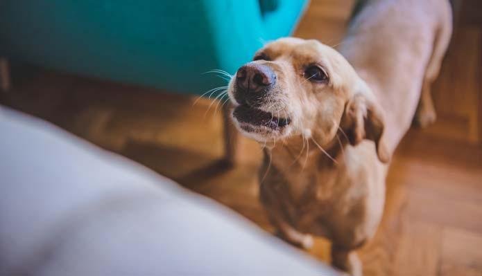 Why Do Dogs Bark