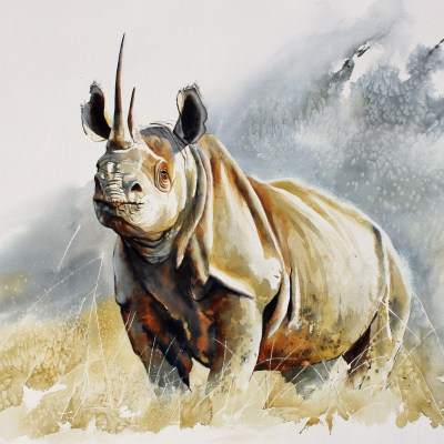 Rhino - Big Five Series