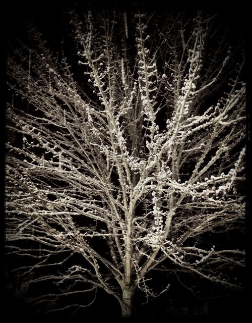 Snowtree_night