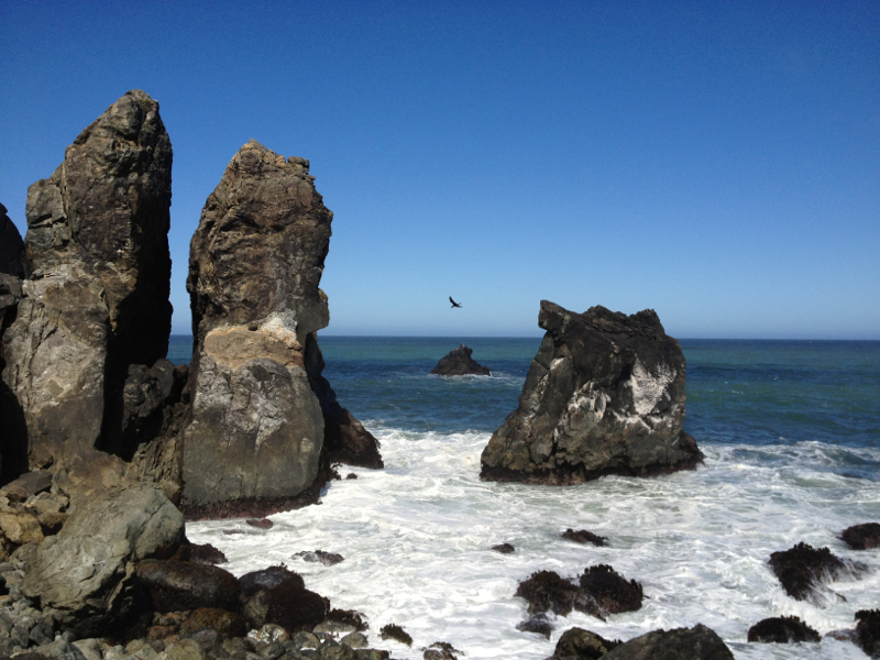 Patrick's Point State Park, CA - 23