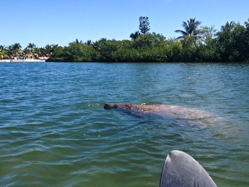 Kayaking_curryhammock-7