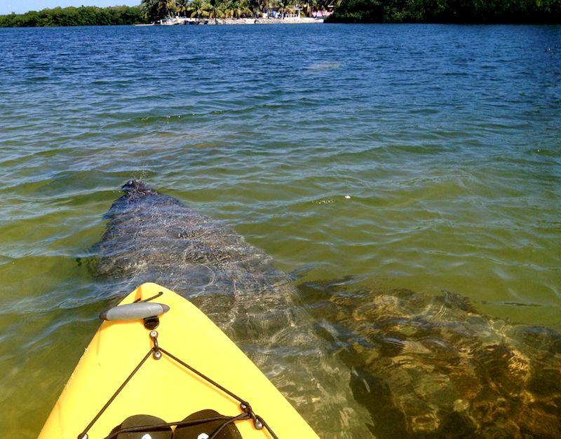 Kayaking_curryhammock-8
