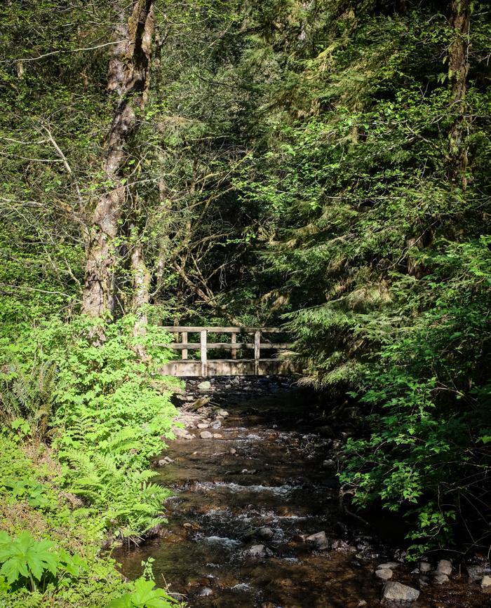 Greatspruce_hike-7