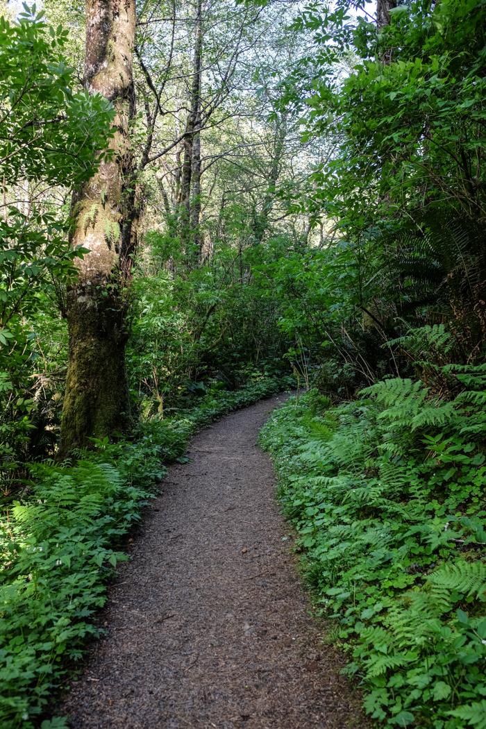 Greatspruce_hike-3