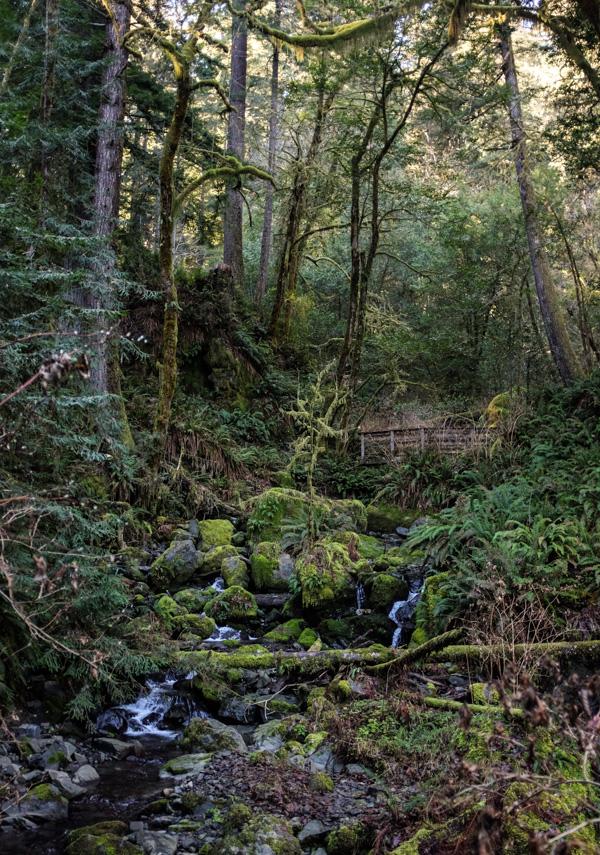 Loeb_redwoods-4805