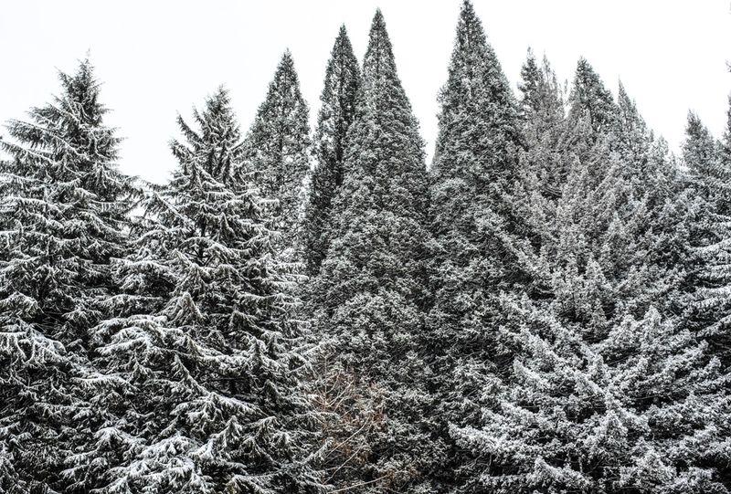 Snowyhike-4911