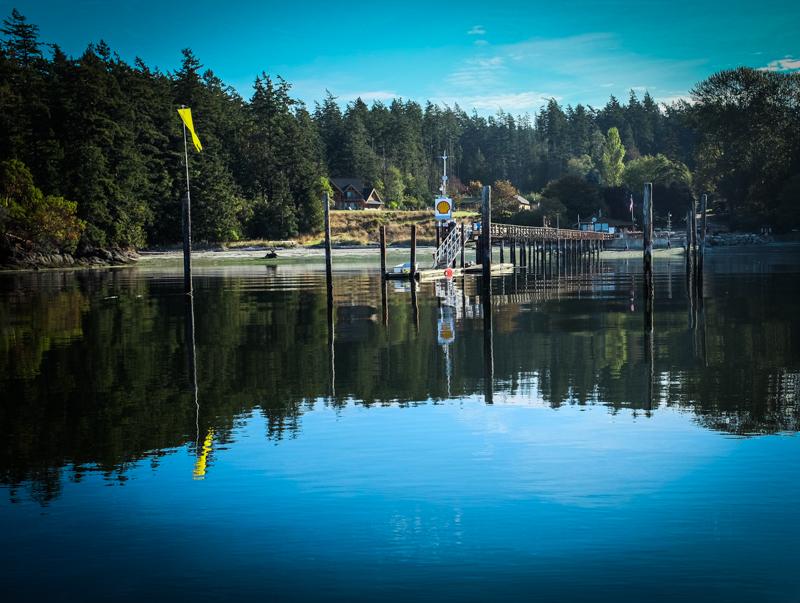 Westbay_orcas-2460