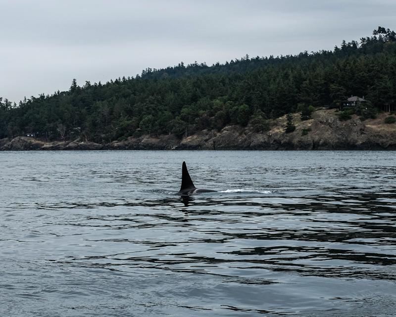 Whalesonradar-2605