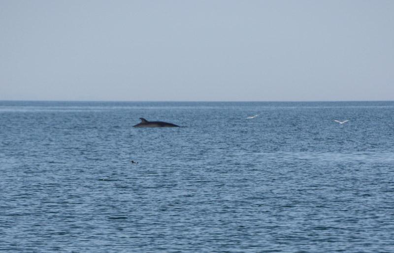 PT_Stuart_orcas-0765