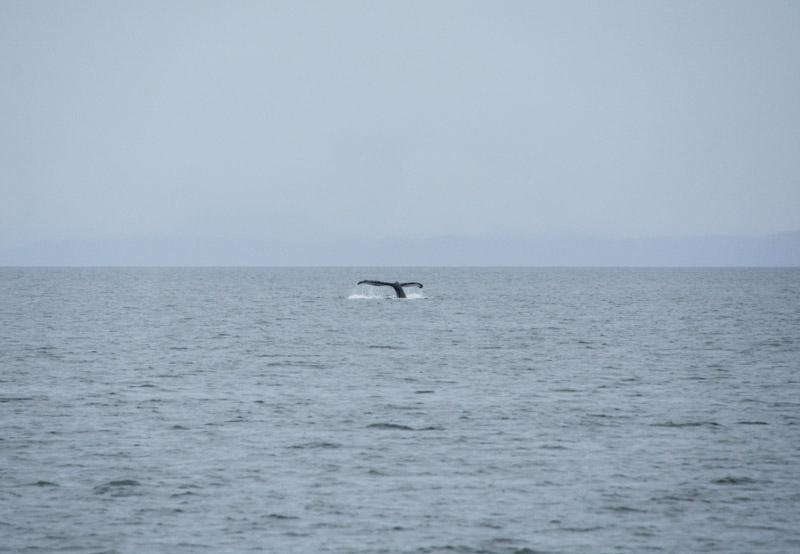 Humpbacks-5505