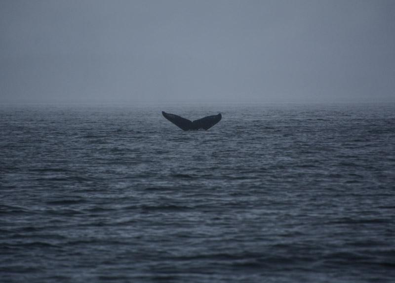 Humpbacks-5692