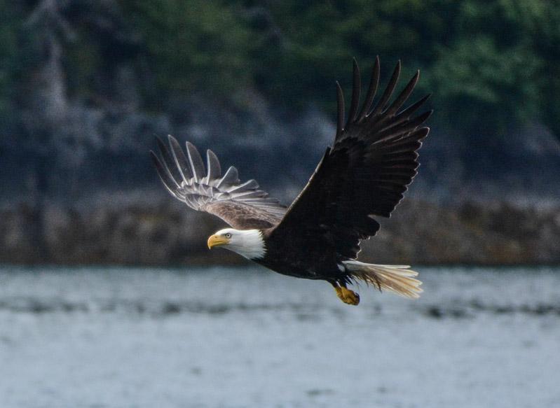 Eagles-6366